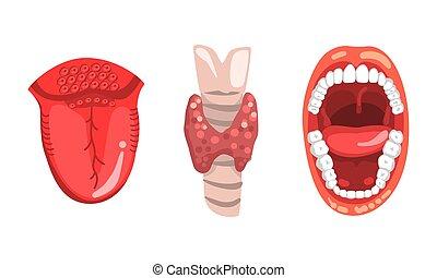 schilddrüse, organe, zunge, satz, abbildung, menschlicher mund, rgeöffnete, intern, karikatur, vektor