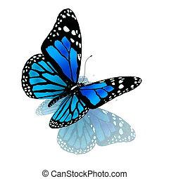 Schmetterling blauer Farbe auf einem weißen