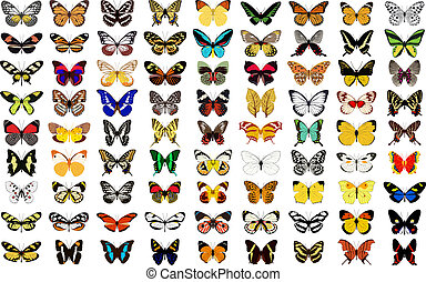 Schmetterling.