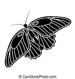 Schmetterlingsschwalbe