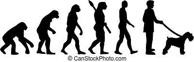 schnauzer, miniatur, evolutionsphasen