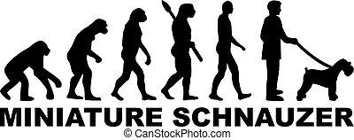 schnauzer, miniatur, evolutionsphasen, wort
