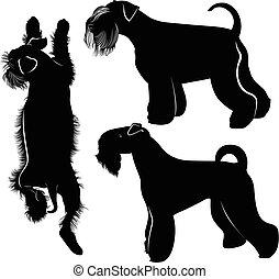 schnauzer, miniatur, hunden