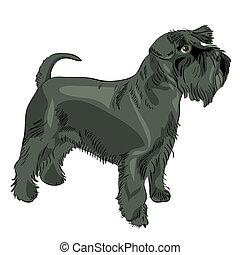 schnauzer, miniatur, vektor, schwarzer hund