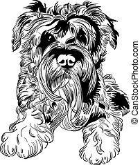 schnauzer, skizze, rasse, hund, hand, vektor, zeichnung
