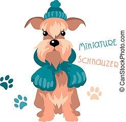 schnauzer, winter, hund, miniatur, hut, schal