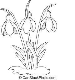 schneeglöckchen, zeichnung