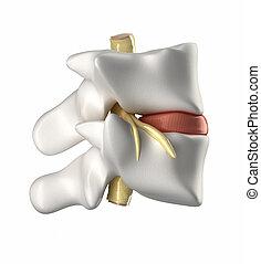 schnur, wirbel, scheibe, intervertebral, spinal