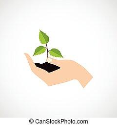 Schutzpflanze halten.