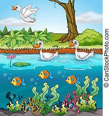 Schwäne und Fische.