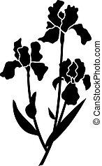 schwarz, iris