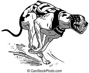 schwarz, rennsport, rennender , hund, weißes