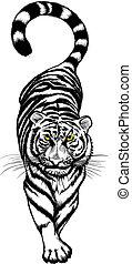 Schwarz-Weiß-Tiger