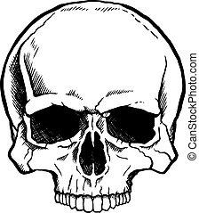 Schwarz-weißer menschlicher Schädel