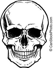 Schwarz-weißer Schädel mit Kiefer