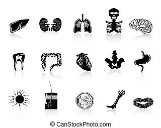 Schwarze menschliche Anatomie-Ikone