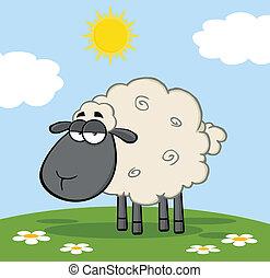 Schwarze Schafe auf einer Wiese.