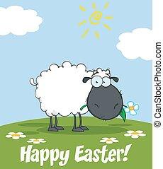 Schwarze Schafe fressen eine Blume