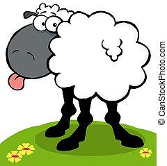 Schwarze Schafe streckten seine Zunge heraus