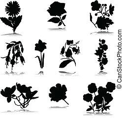 Schwarzer Blumenvektor-Silhouette