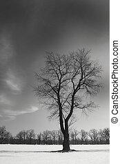 Schwarzer einzelner Baum