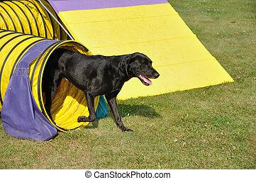 Schwarzer Labrador Retriever verlässt den gelben Versorgungstunnel