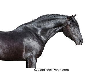 Schwarzer Pferdekopf auf weiß.