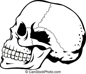 Schwarzer und weißer menschlicher Schädel.