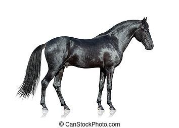Schwarzes Pferd auf weiß.