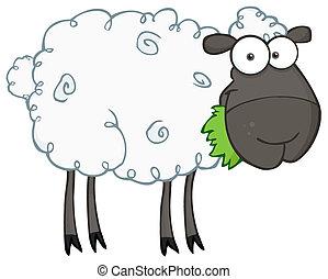 Schwarzes Schaf, das Gras frisst