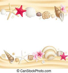 seashell, rahmen