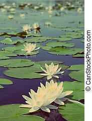 See mit wasserlilien Blumen - Vintage Retro Stil.
