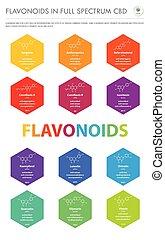 senkrecht, formeln, geschaeftswelt, infographic, flavonoids, cbd, voll, strukturell, spektrum