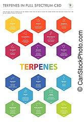 senkrecht, formeln, geschaeftswelt, infographic, terpenes, cbd, voll, strukturell, spektrum