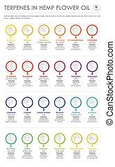 senkrecht, formeln, oel, geschaeftswelt, blume, terpenes, infographic, hanf, strukturell
