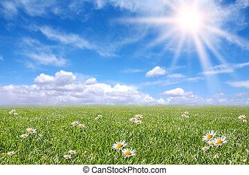 Serene sonnige Feldwiese im Frühling