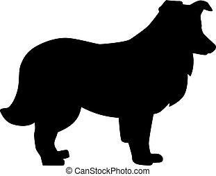 shetland, silhouette, schäferhund, schwarz