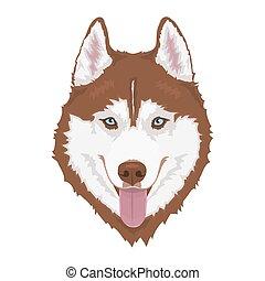 sibirisch, hund, heiser