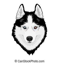 Sibirischer Huskyhund