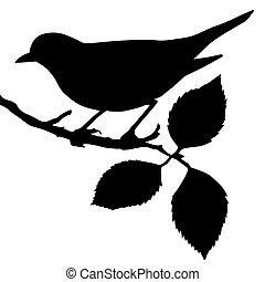 Silhouette des Vogels auf der Ast.