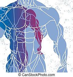 Silhouette eines Mannes torso.