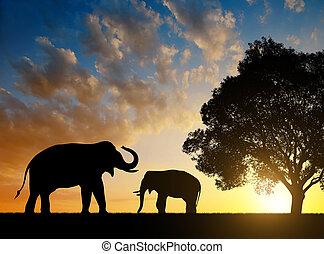 Silhouette-Elefanten.
