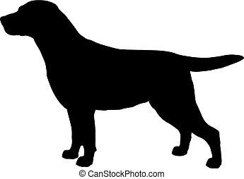 silhouette, schwarz, weißer hund, labrador