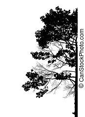 Silhouette von Bäumen.