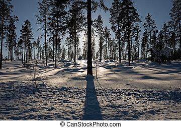 Silhouette von Bäumen