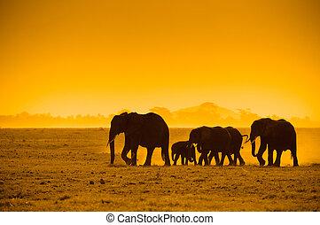 Silhouette von Elefanten