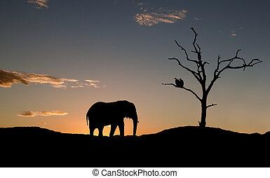 Silhouette von Elefanten und Geiern am Sonnenuntergang in Afrika