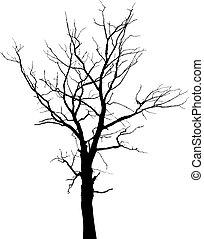 Silhouette von totem Baum ohne Blätter