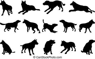 silhouetten, hund