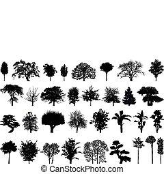 Silhouetten von Bäumen.